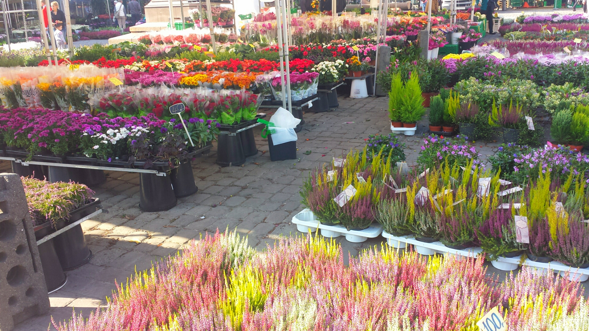 Colourful_Flower_Markets_Oslo_Norway