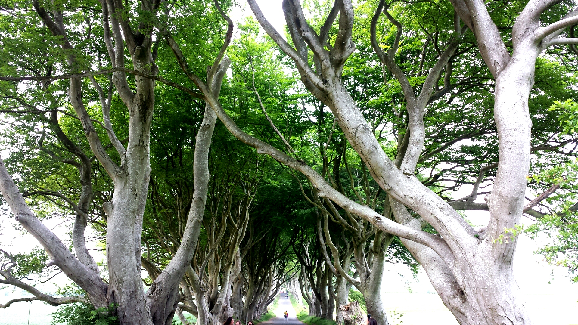 Dark Hedges_Northern Ireland
