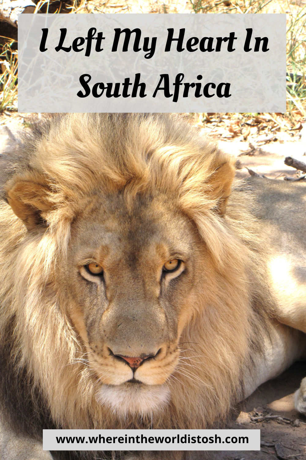 I left My Heart In South Africa