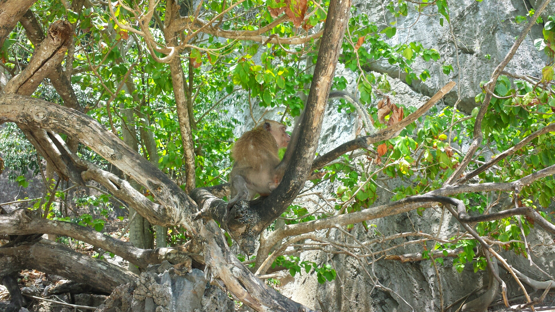 Monkey_Beach_Phuket_Thailand_Islands