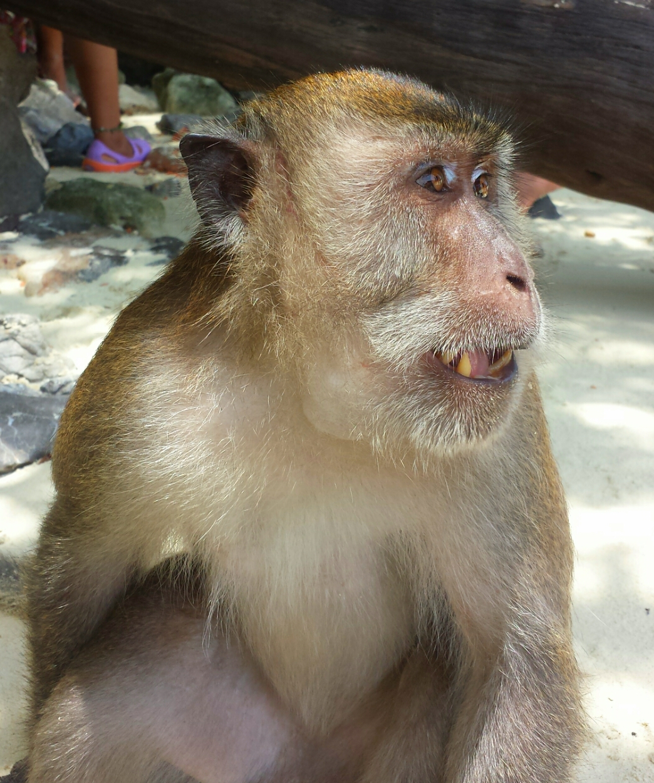 Monkey_Beach_Phuket_Thailand_Islands