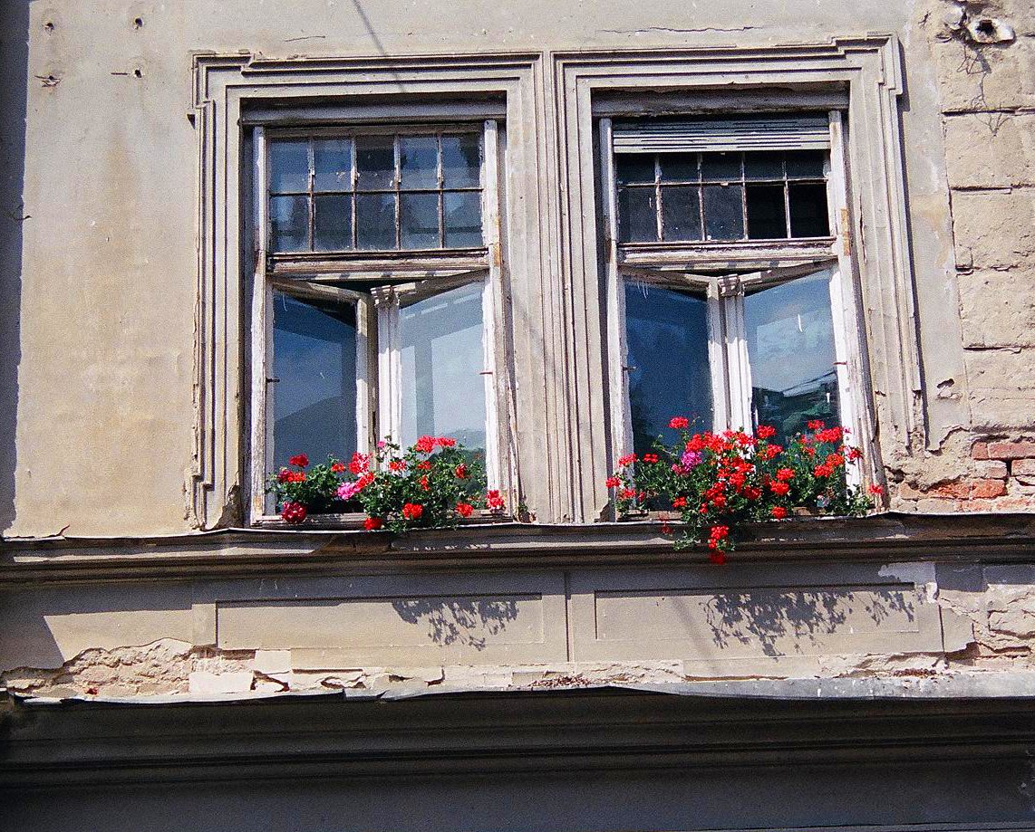 European_Window_Flowers