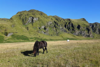 Icelandic_Ponies_Ring_Road_Iceland