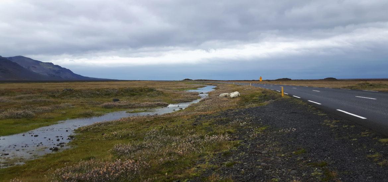 Icelandic_Ring_Road_Hofn_Iceland